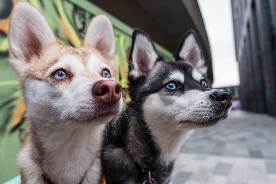 helloBARK! dogs